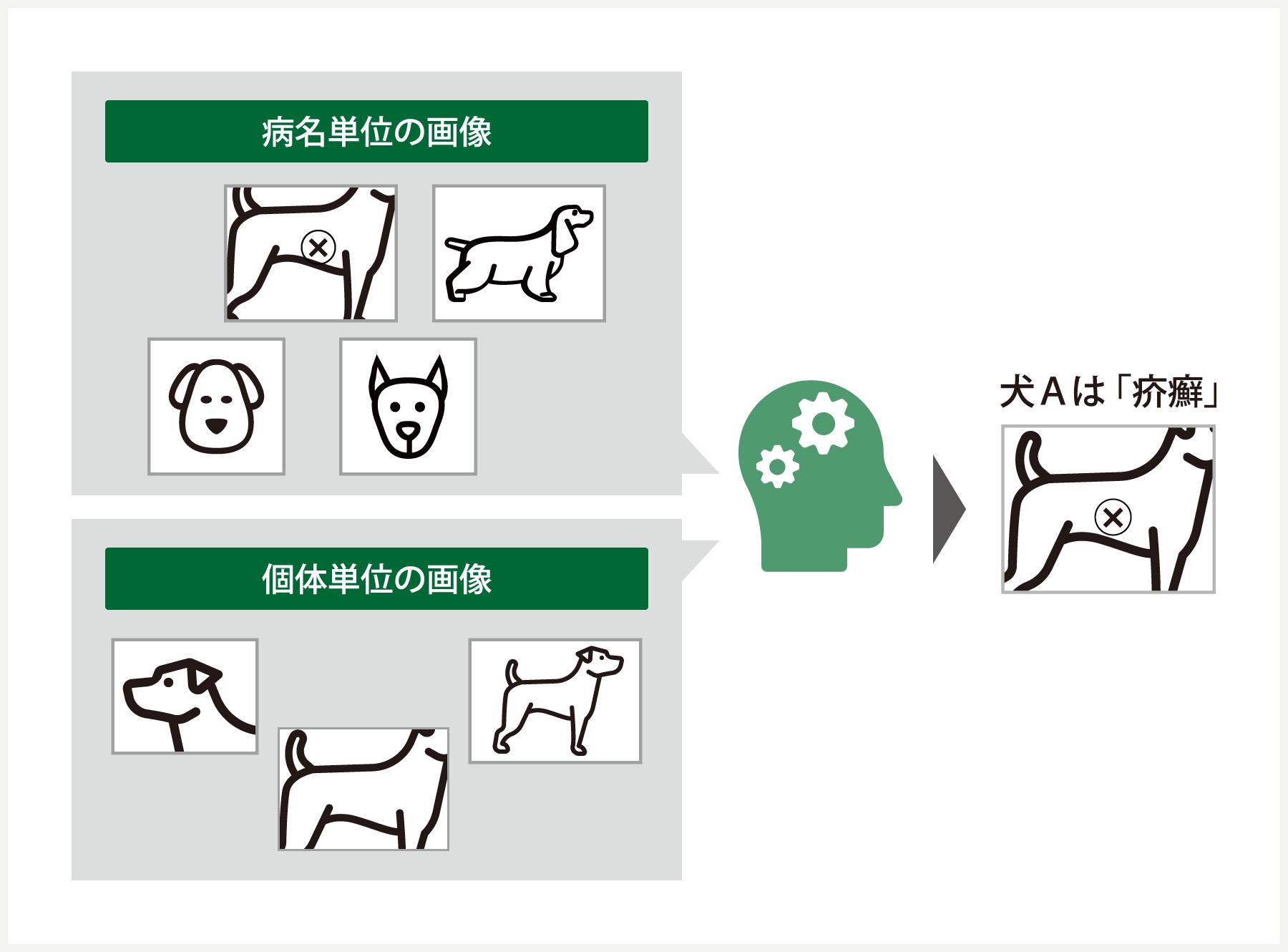 獣医療における皮膚病の自動判定